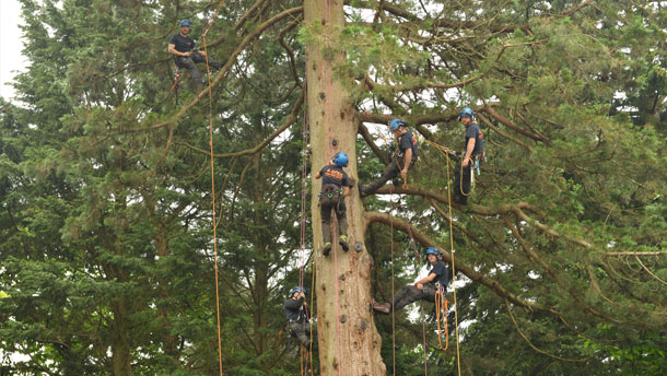 Apex Tree Surgeons Ltd