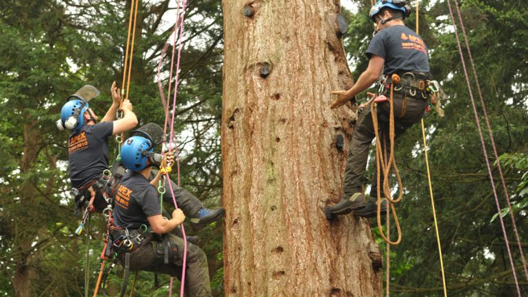 A Q&A with Apex Tree Surgeons Ltd