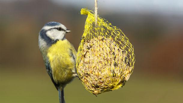 Look after the birds in your garden