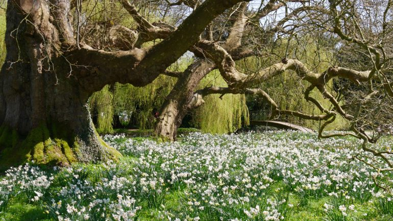 Springtime at the National Trust