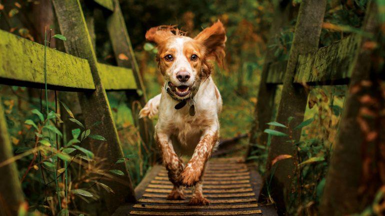 Cerberus Organic Dog Food Ltd